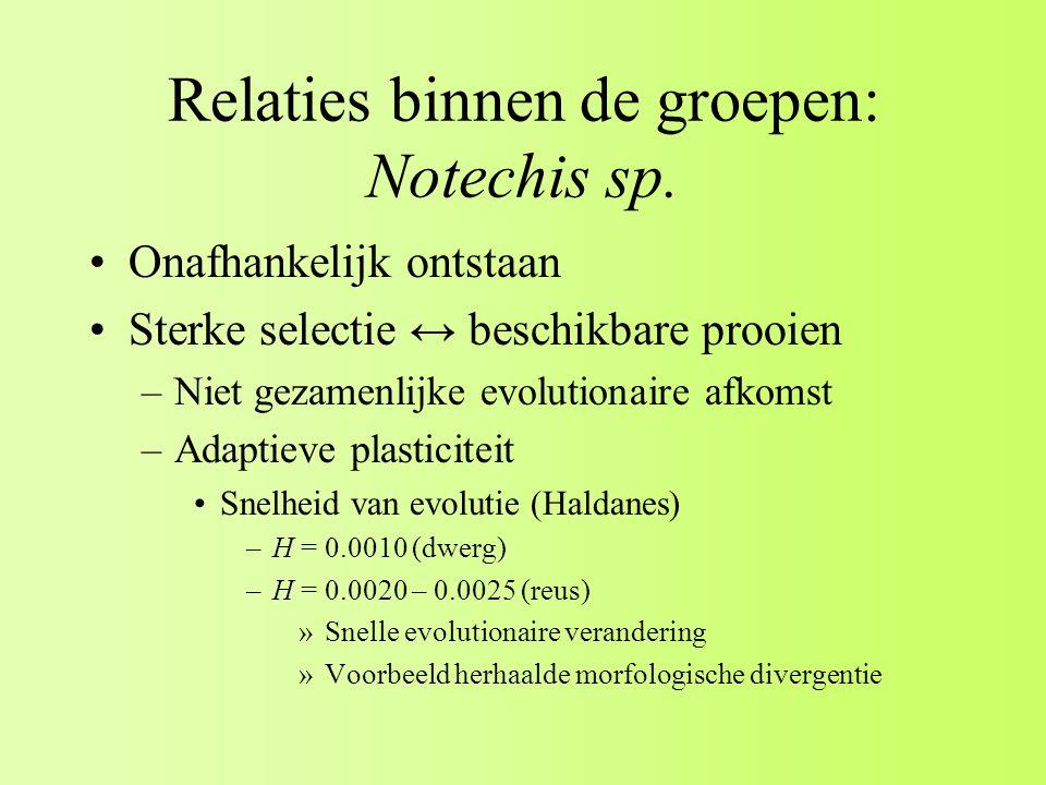 Relaties binnen de groepen: Notechis sp.