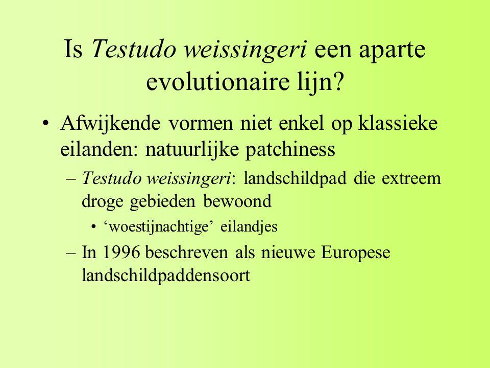 Is Testudo weissingeri een aparte evolutionaire lijn.