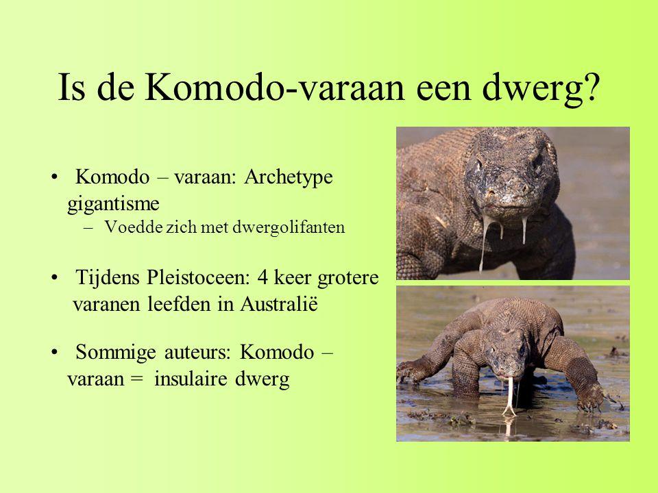 Is de Komodo-varaan een dwerg.