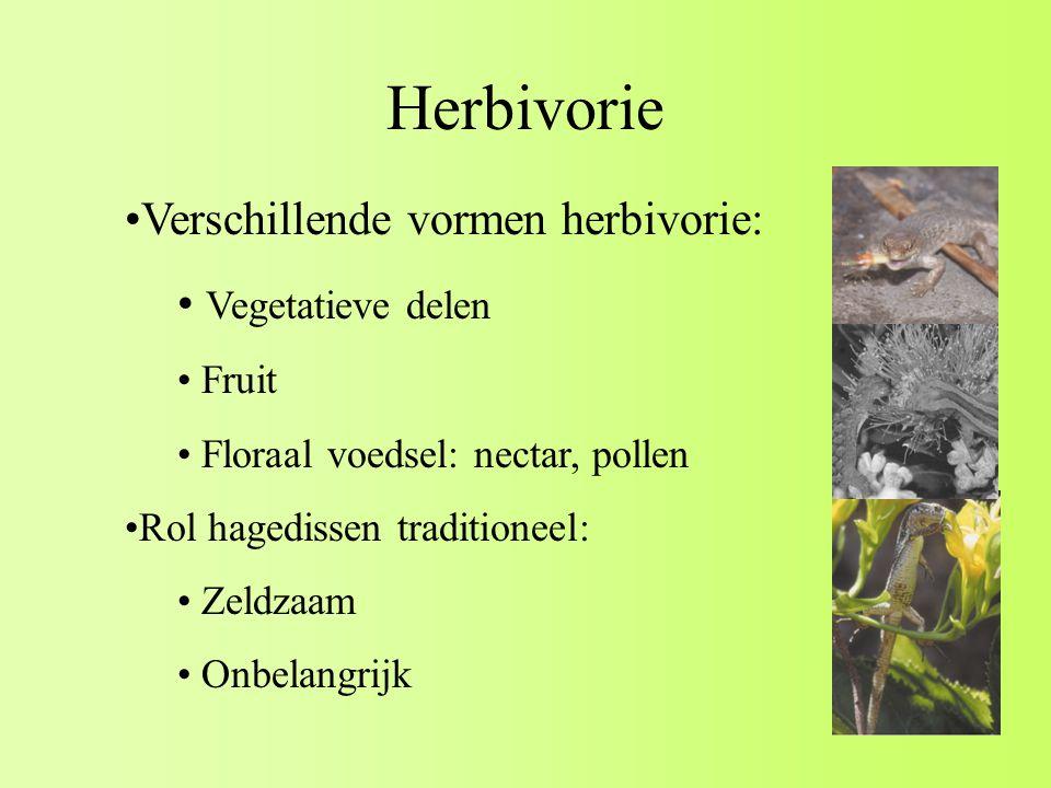 Herbivorie Verschillende vormen herbivorie: Vegetatieve delen Fruit Floraal voedsel: nectar, pollen Rol hagedissen traditioneel: Zeldzaam Onbelangrijk
