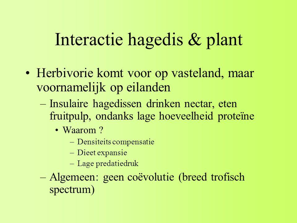 Interactie hagedis & plant Herbivorie komt voor op vasteland, maar voornamelijk op eilanden –Insulaire hagedissen drinken nectar, eten fruitpulp, ondanks lage hoeveelheid proteïne Waarom .