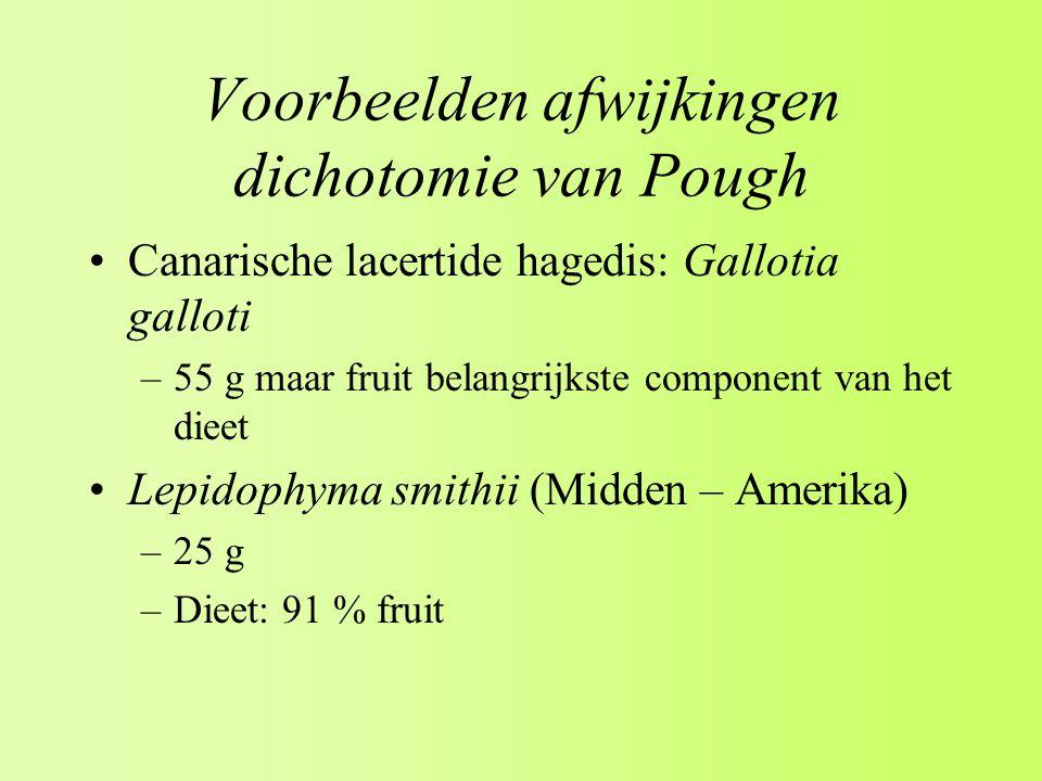 Voorbeelden afwijkingen dichotomie van Pough Canarische lacertide hagedis: Gallotia galloti –55 g maar fruit belangrijkste component van het dieet Lepidophyma smithii (Midden – Amerika) –25 g –Dieet: 91 % fruit