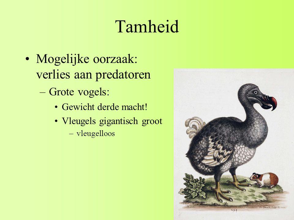 Tamheid Mogelijke oorzaak: verlies aan predatoren –Grote vogels: Gewicht derde macht.
