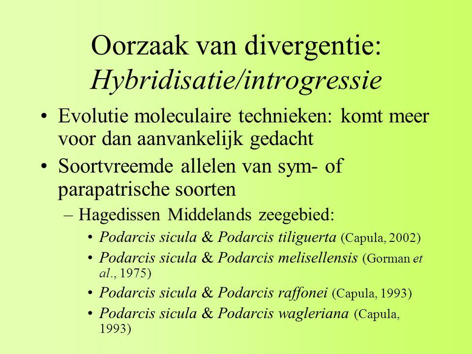 Oorzaak van divergentie: Hybridisatie/introgressie Evolutie moleculaire technieken: komt meer voor dan aanvankelijk gedacht Soortvreemde allelen van sym- of parapatrische soorten –Hagedissen Middelands zeegebied: Podarcis sicula & Podarcis tiliguerta (Capula, 2002) Podarcis sicula & Podarcis melisellensis (Gorman et al., 1975) Podarcis sicula & Podarcis raffonei (Capula, 1993) Podarcis sicula & Podarcis wagleriana (Capula, 1993)