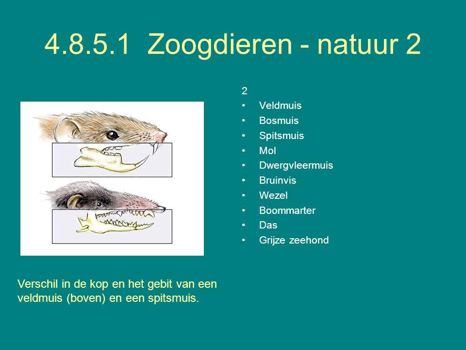 4.8.5.1 Zoogdieren - natuur 2 2 Veldmuis Bosmuis Spitsmuis Mol Dwergvleermuis Bruinvis Wezel Boommarter Das Grijze zeehond Verschil in de kop en het g
