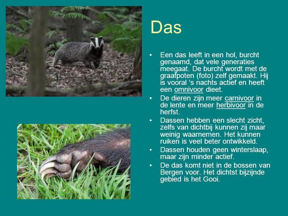 Das Een das leeft in een hol, burcht genaamd, dat vele generaties meegaat. De burcht wordt met de graafpoten (foto) zelf gemaakt. Hij is vooral 's nac