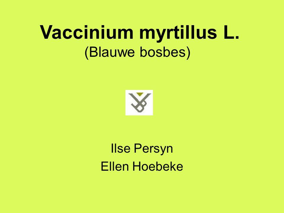 Ilse Persyn Ellen Hoebeke Vaccinium myrtillus L. (Blauwe bosbes)