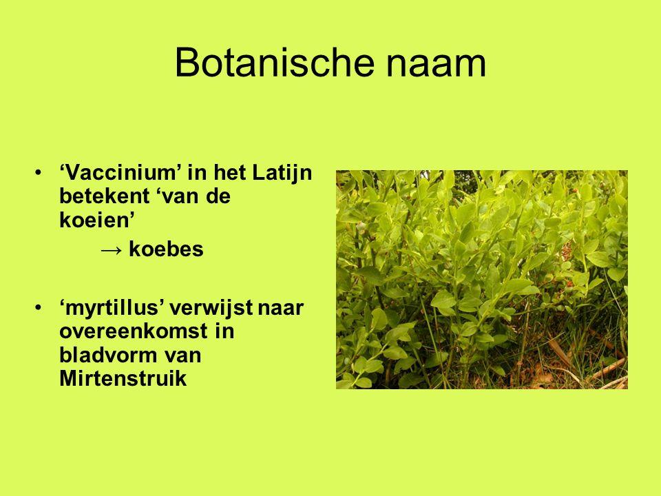 Geschiedenis Bilberry komt van bolleba = Deens voor dark berry Werking van Blauwe Bosbes op de urinewegen werd al door Dioscorides beschreven In 17de eeuw werden in Noord-Engeland de bosbessen met room en melk gegeten In Europa werden bessen gebruikt om wijn te kleuren