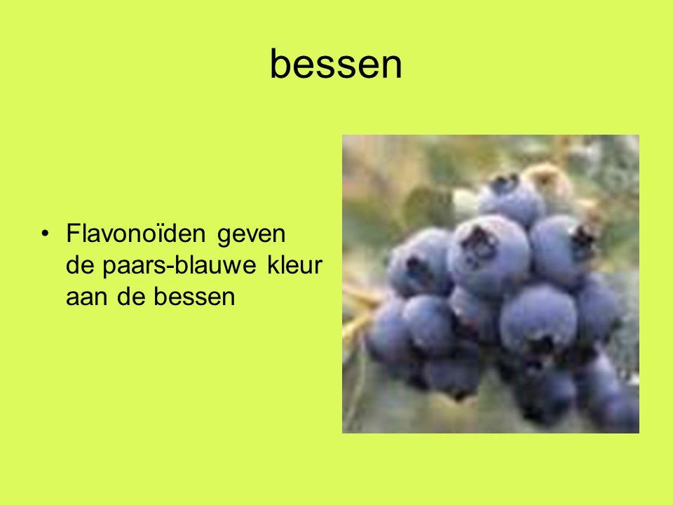 bessen Flavonoïden geven de paars-blauwe kleur aan de bessen