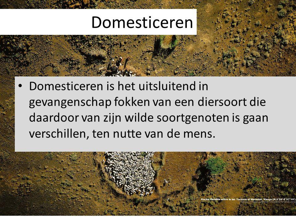 Domesticeren Domesticeren is het uitsluitend in gevangenschap fokken van een diersoort die daardoor van zijn wilde soortgenoten is gaan verschillen, t