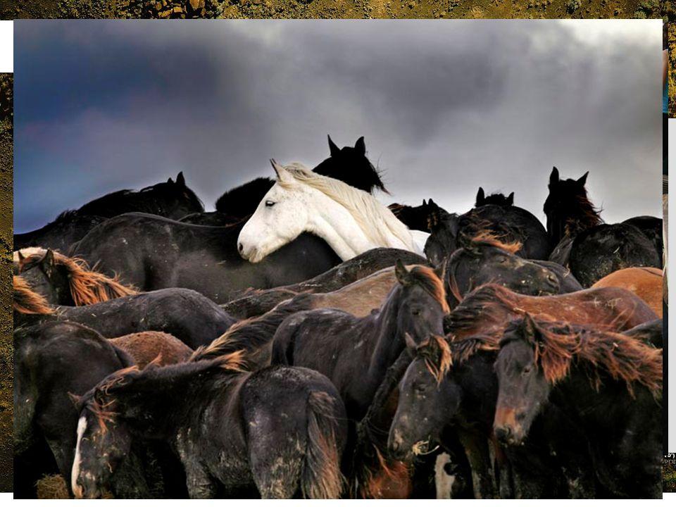 Voordelen van Eurazië Grootte Ligging Aantal potentiële soorten Percentage geschikte soorten