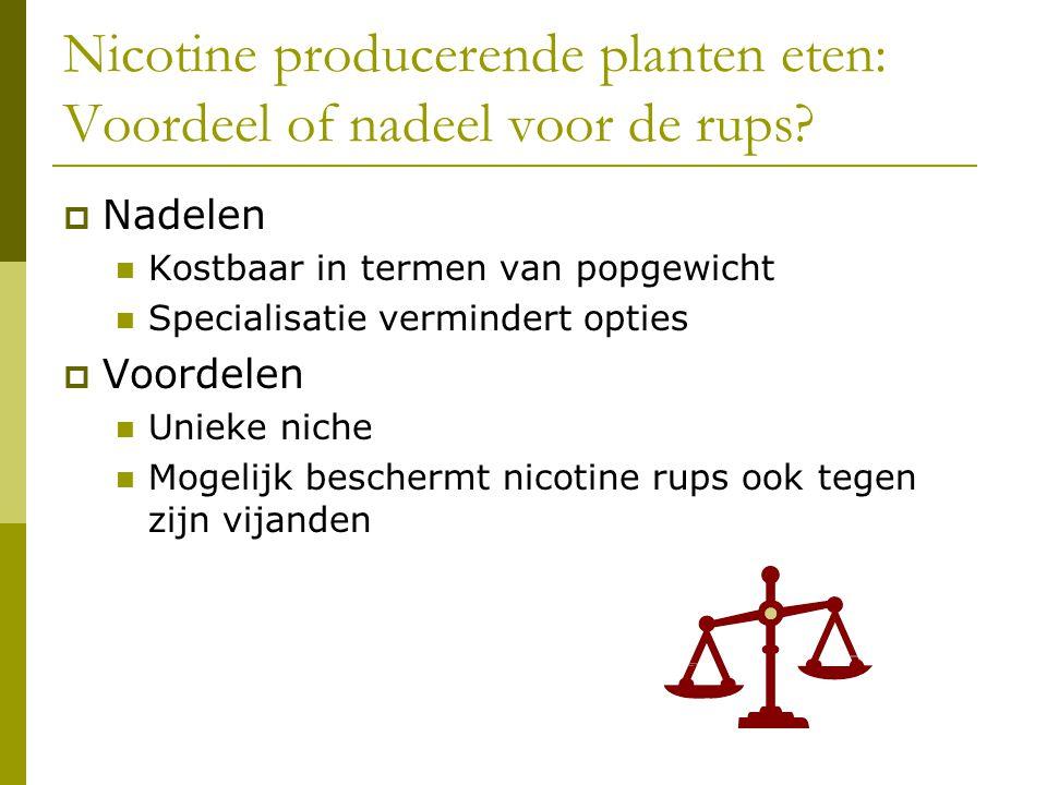 Nicotine producerende planten eten: Voordeel of nadeel voor de rups.