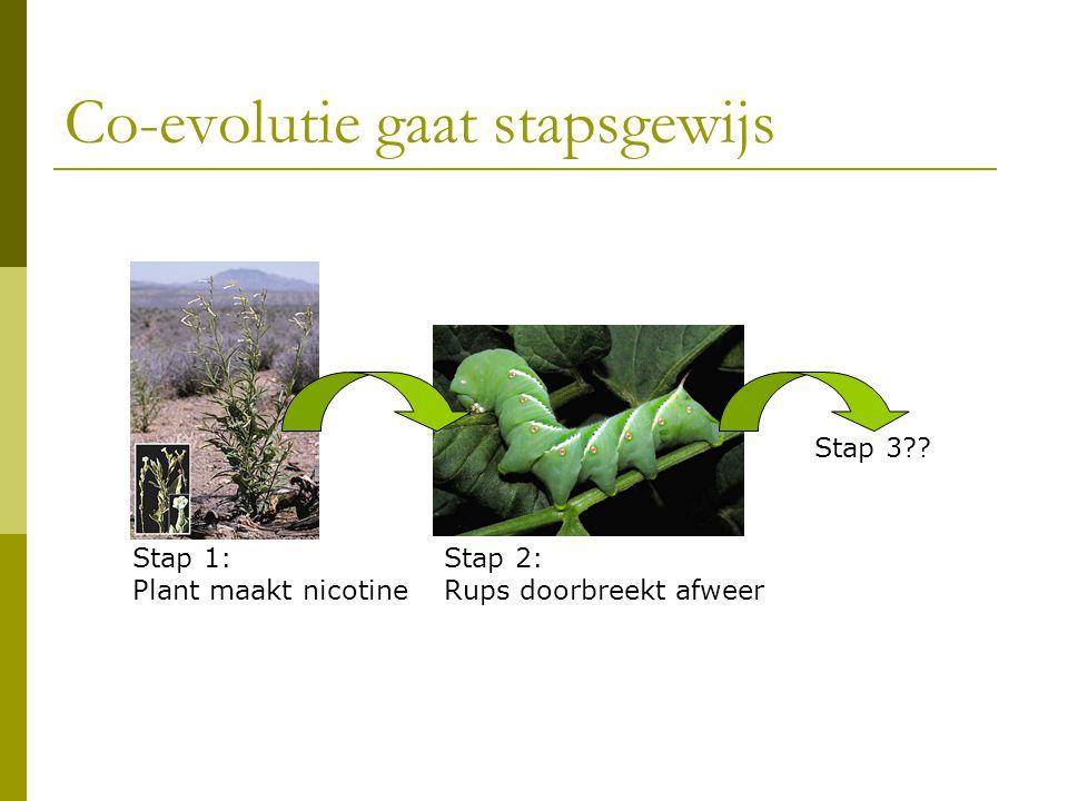 Co-evolutie gaat stapsgewijs Stap 1: Plant maakt nicotine Stap 2: Rups doorbreekt afweer Stap 3??
