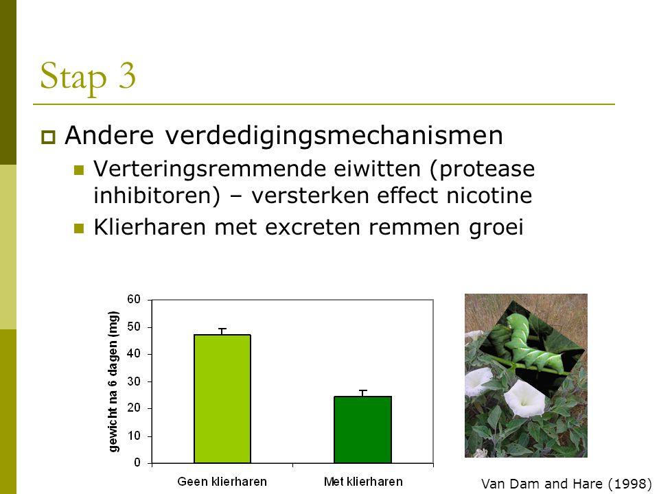 Stap 3  Andere verdedigingsmechanismen Verteringsremmende eiwitten (protease inhibitoren) – versterken effect nicotine Klierharen met excreten remmen groei Van Dam and Hare (1998)