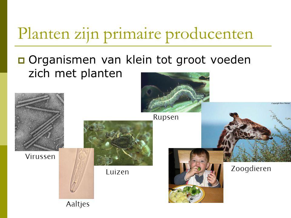 Planten zijn primaire producenten Rupsen Luizen Zoogdieren Virussen Aaltjes  Organismen van klein tot groot voeden zich met planten