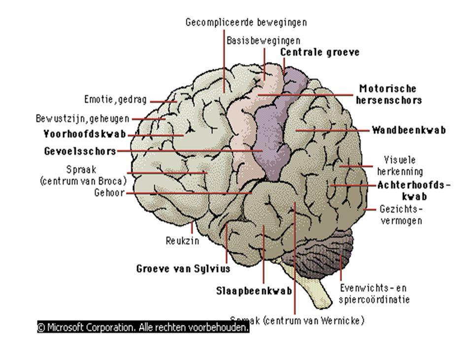 Oorzaken van epilepsie Onbekend Aanleg, erfelijkheid Litteken van trauma (kogelverwonding) Hersenschudding Abces Tumoren (metastasen) Empyeem Encefalitis CVA