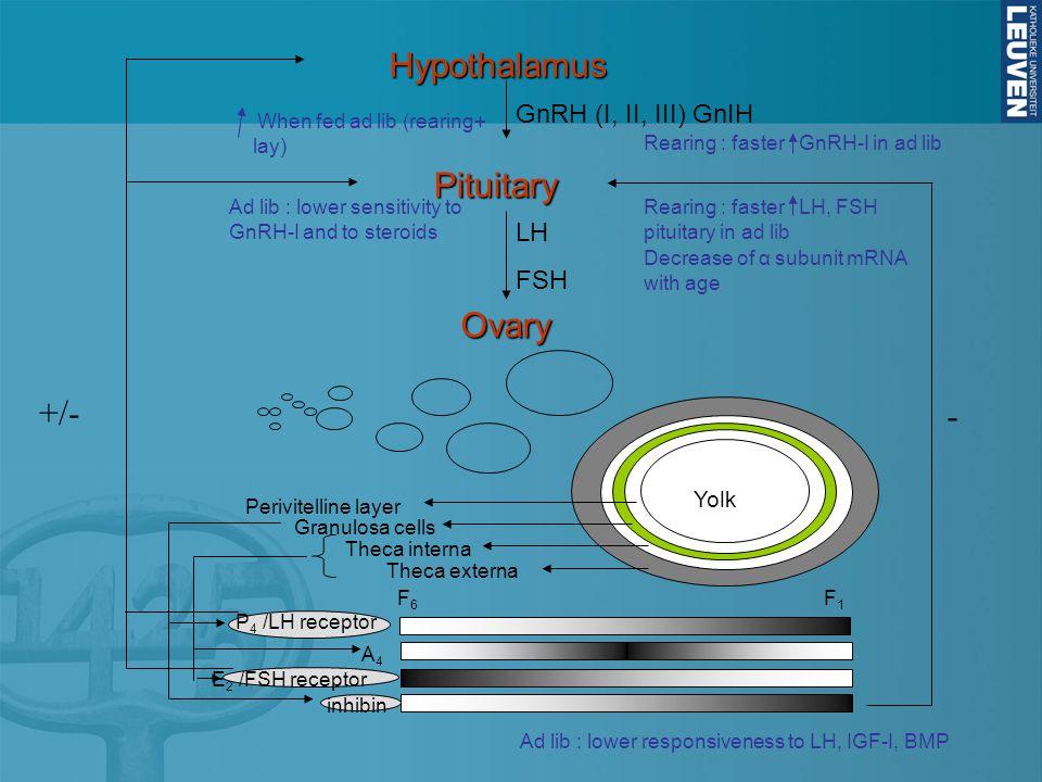+/- -HypothalamusPituitary Ovary GnRH (I, II, III) GnIH LH FSH Yolk Perivitelline layer Granulosa cells Theca interna Theca externa inhibin P 4 /LH receptor A4A4 E 2 /FSH receptor F6F6 F1F1 When fed ad lib (rearing+ lay) Ad lib : lower sensitivity to GnRH-I and to steroids Decrease of α subunit mRNA with age Rearing : faster GnRH-I in ad lib Rearing : faster LH, FSH pituitary in ad lib Ad lib : lower responsiveness to LH, IGF-I, BMP