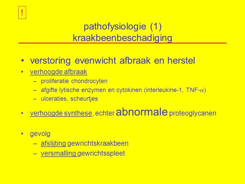 pathofysiologie (1) kraakbeenbeschadiging verstoring evenwicht afbraak en herstel verhoogde afbraak –proliferatie chondrocyten –afgifte lytische enzymen en cytokinen (interleukine-1, TNF-  ) –ulceraties, scheurtjes verhoogde synthese, echter abnormale proteoglycanen gevolg –afslijting gewrichtskraakbeen –versmalling gewrichtsspleet !