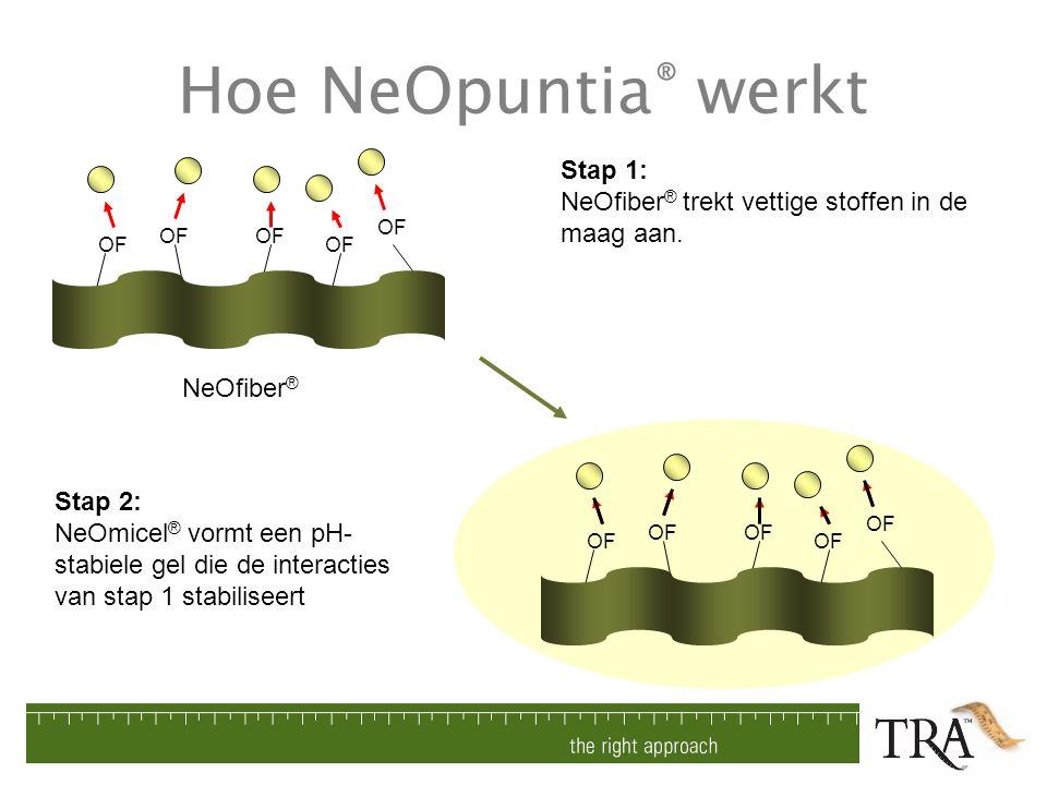 Hoe NeOpuntia ® werkt OF NeOfiber ® OF Stap 1: NeOfiber ® trekt vettige stoffen in de maag aan. Stap 2: NeOmicel ® vormt een pH- stabiele gel die de i