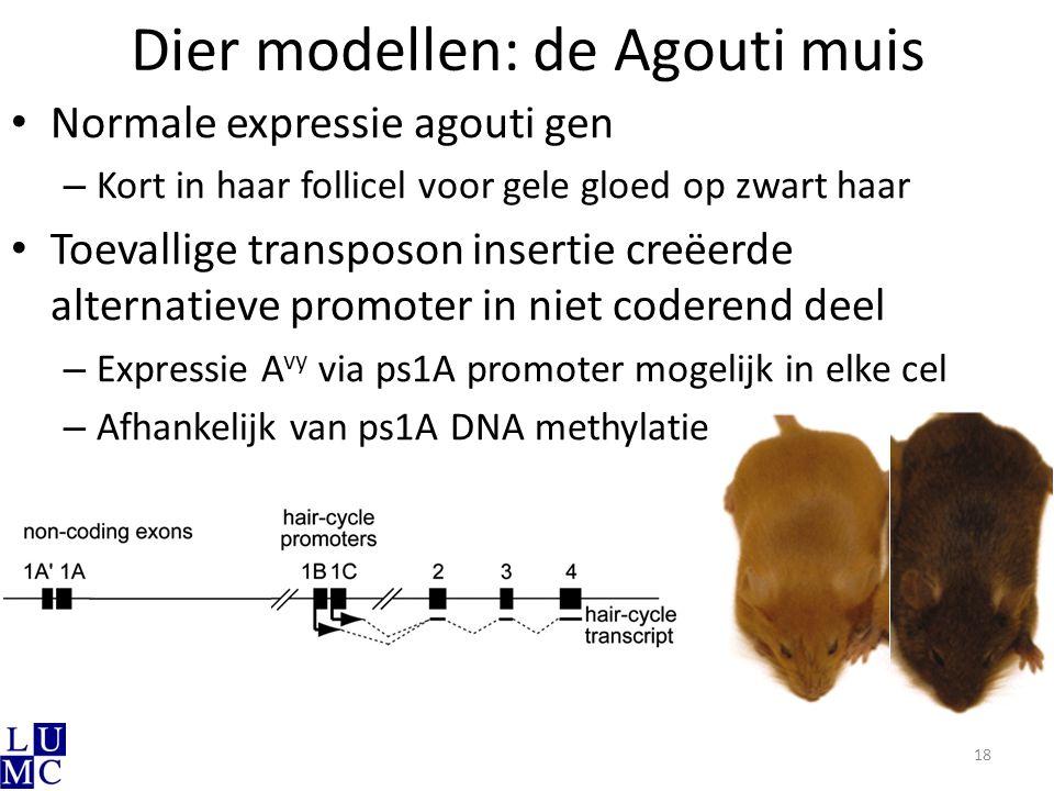Dier modellen: de Agouti muis 18 Normale expressie agouti gen – Kort in haar follicel voor gele gloed op zwart haar Toevallige transposon insertie cre
