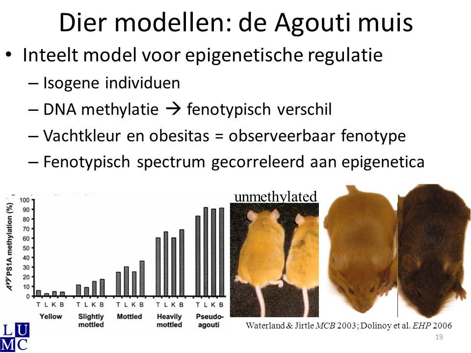 Dier modellen: de Agouti muis Inteelt model voor epigenetische regulatie – Isogene individuen – DNA methylatie  fenotypisch verschil – Vachtkleur en