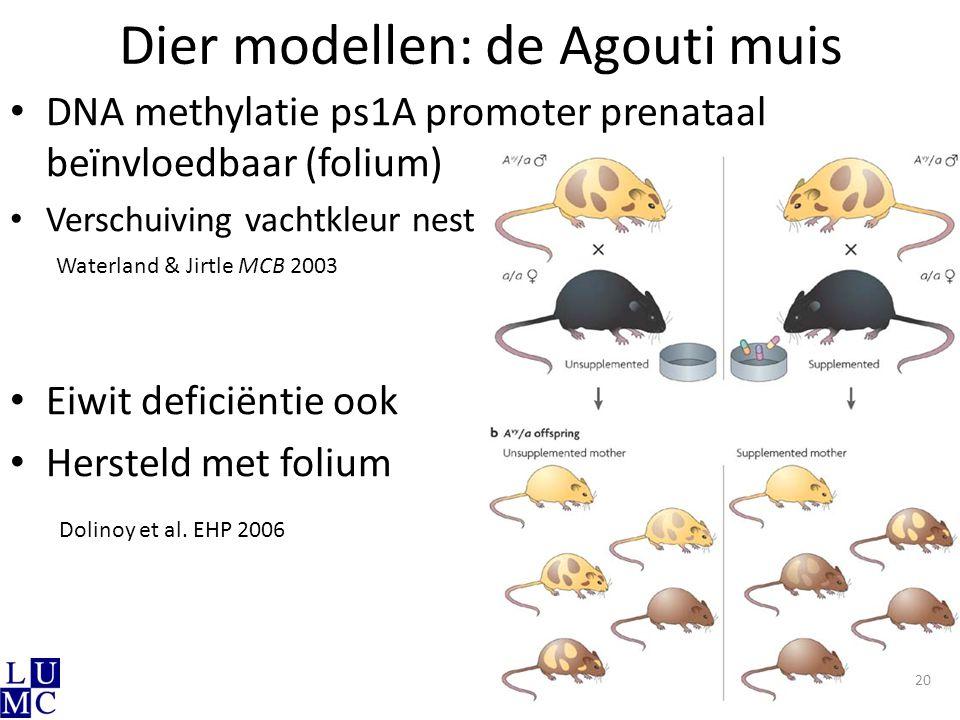 Dier modellen: de Agouti muis DNA methylatie ps1A promoter prenataal beïnvloedbaar (folium) Verschuiving vachtkleur nest Eiwit deficiëntie ook Herstel