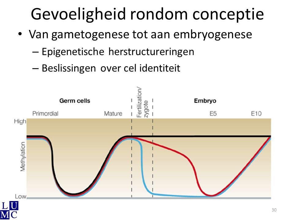 Gevoeligheid rondom conceptie Van gametogenese tot aan embryogenese – Epigenetische herstructureringen – Beslissingen over cel identiteit 30