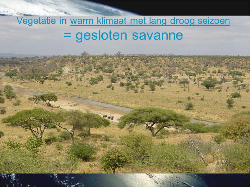 Vegetatie in warm klimaat met lang droog seizoen = gesloten savanne