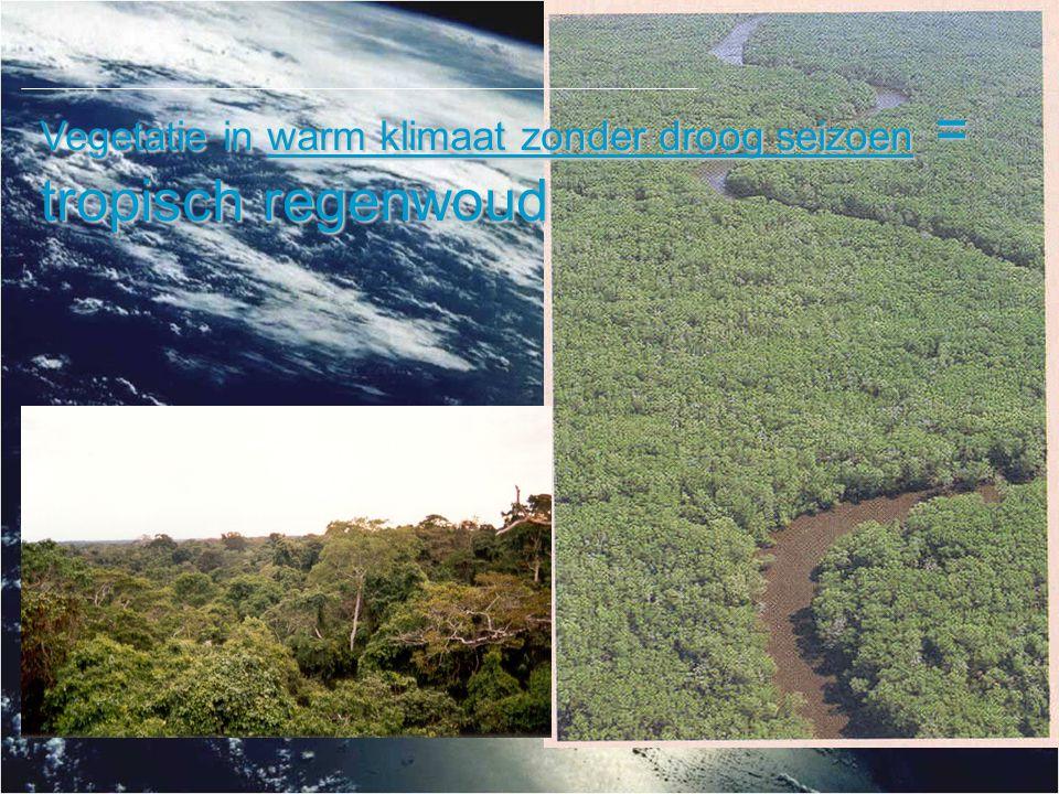 Vegetatie in warm klimaat zonder droog seizoen = tropisch regenwoud