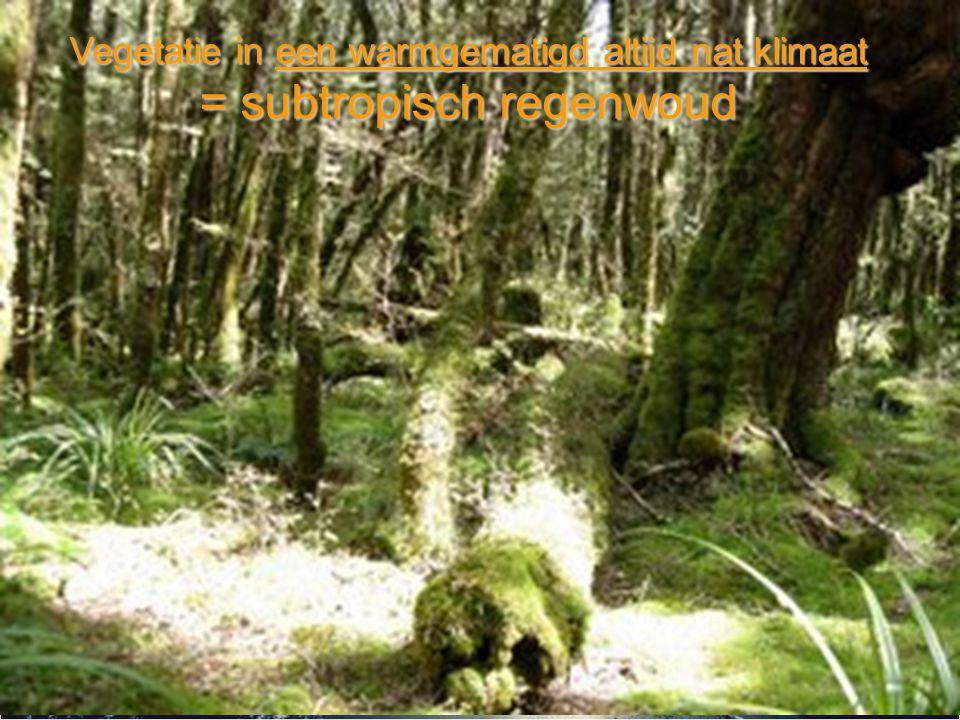 Vegetatie in een warmgematigd altijd nat klimaat = subtropisch regenwoud