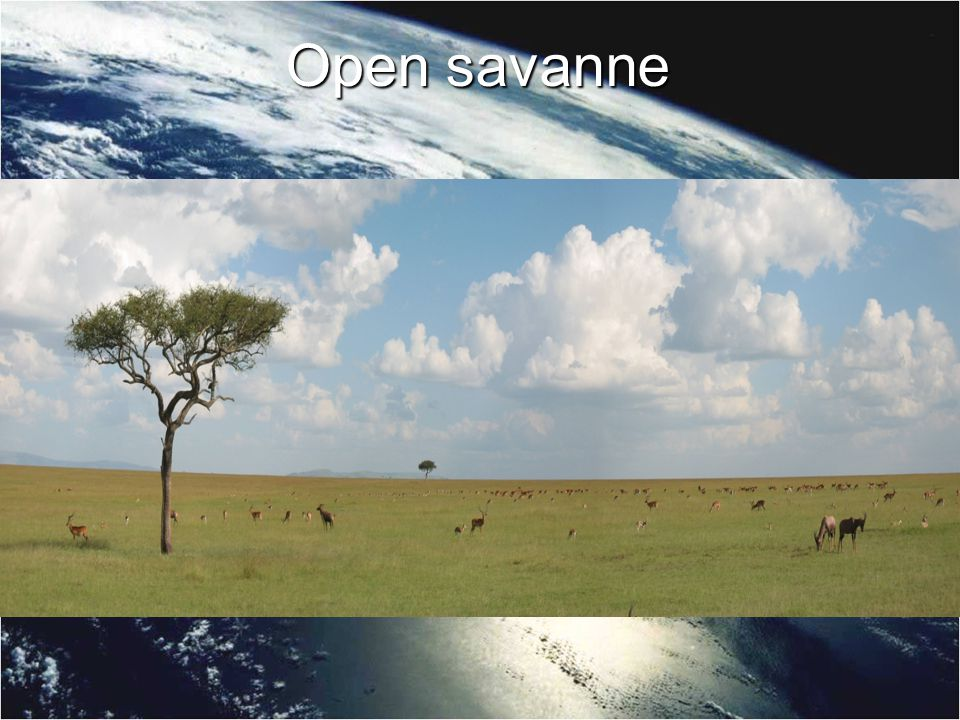 Open savanne