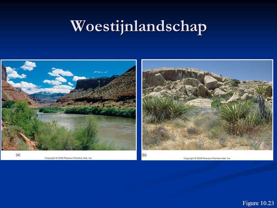 Woestijnlandschap Figure 10.23