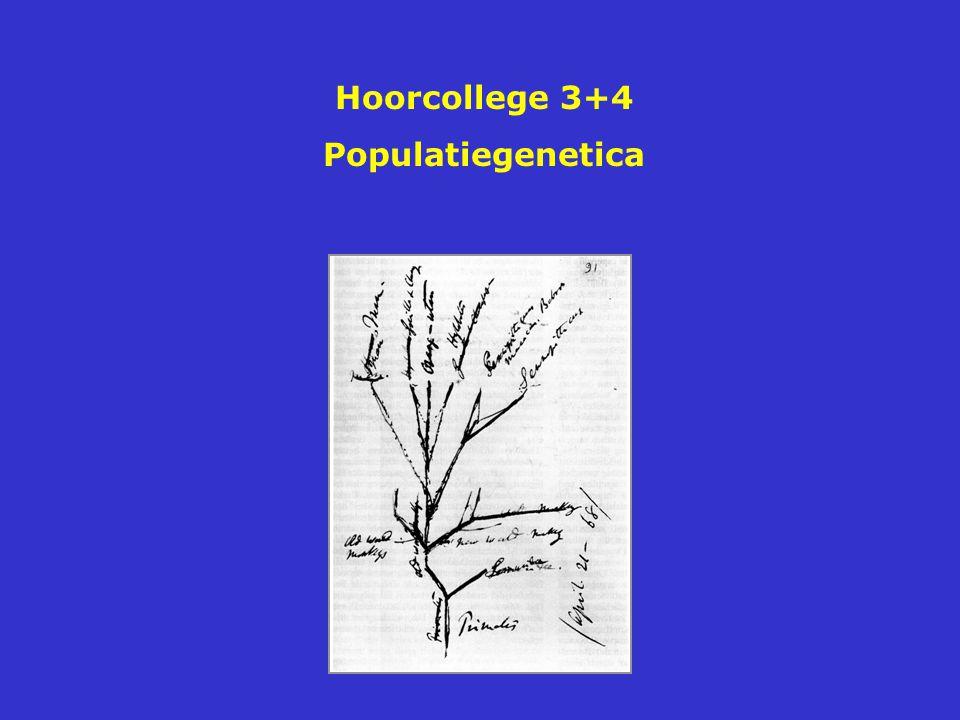 Frequentie heterozygoten in overblijvende populaties met verschillende populatiegrootte na meerdere generaties na random kruisingen De kans op inteelt is groter in kleine populaties