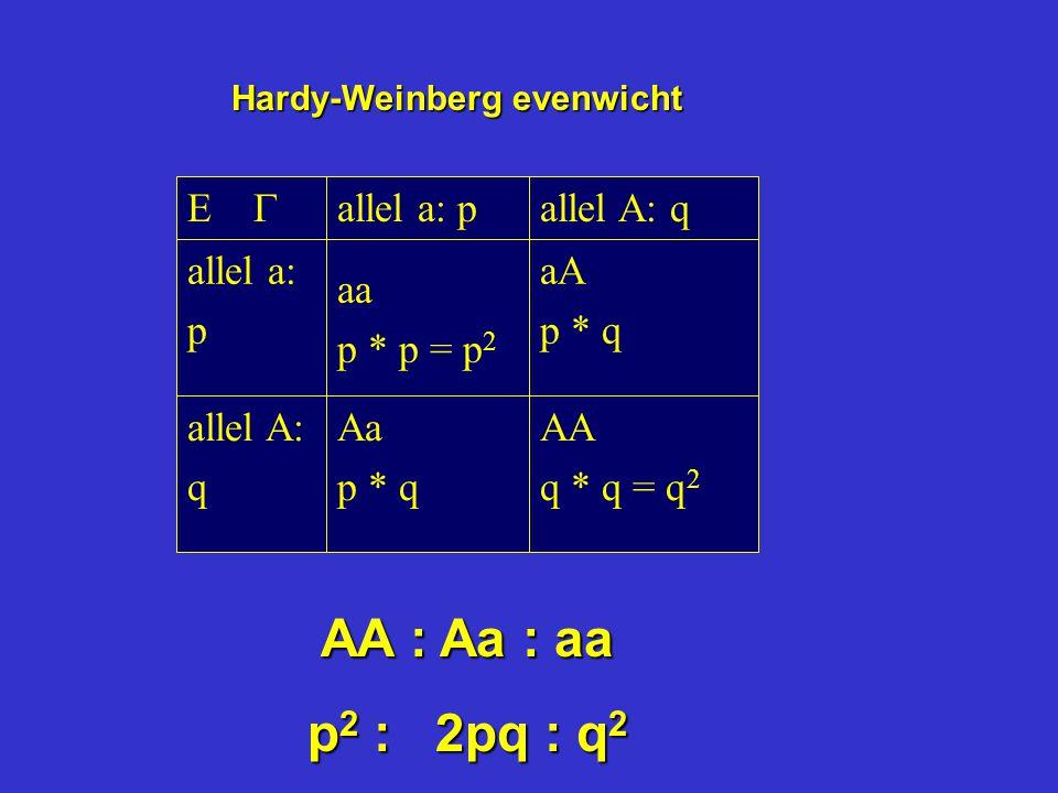 Hardy-Weinberg evenwicht AA q * q = q 2 Aa p * q allel A: q aA p * q aa p * p = p 2 allel a: p allel A: qallel a: p   AA : Aa : aa p 2 : 2pq : q 2