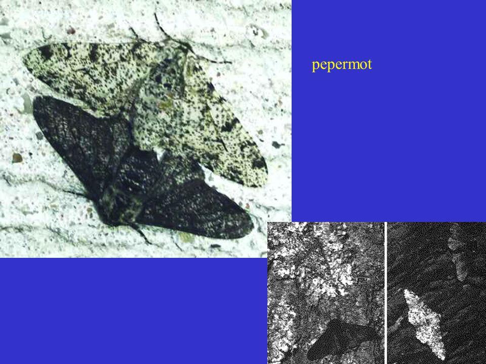 Verspreiding Biston betularia