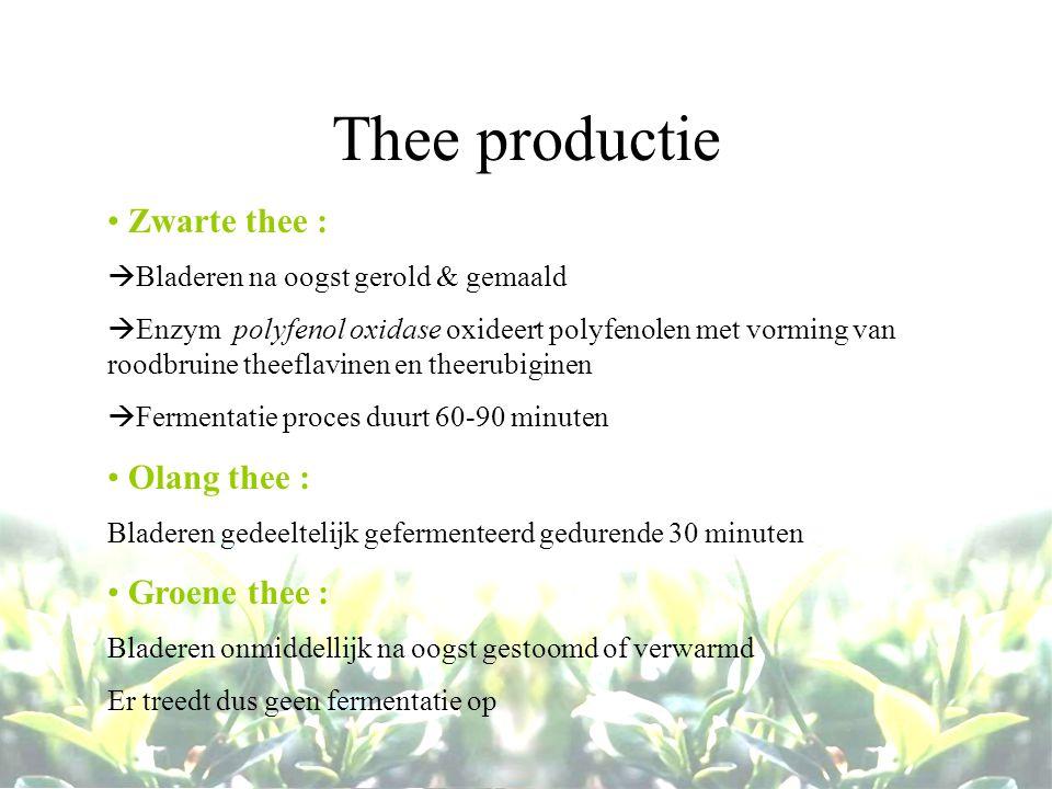 Thee productie Zwarte thee :  Bladeren na oogst gerold & gemaald  Enzym polyfenol oxidase oxideert polyfenolen met vorming van roodbruine theeflavin