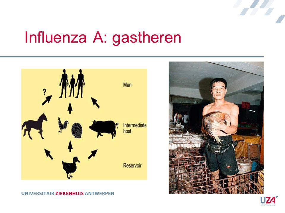 Influenza A: gastheren