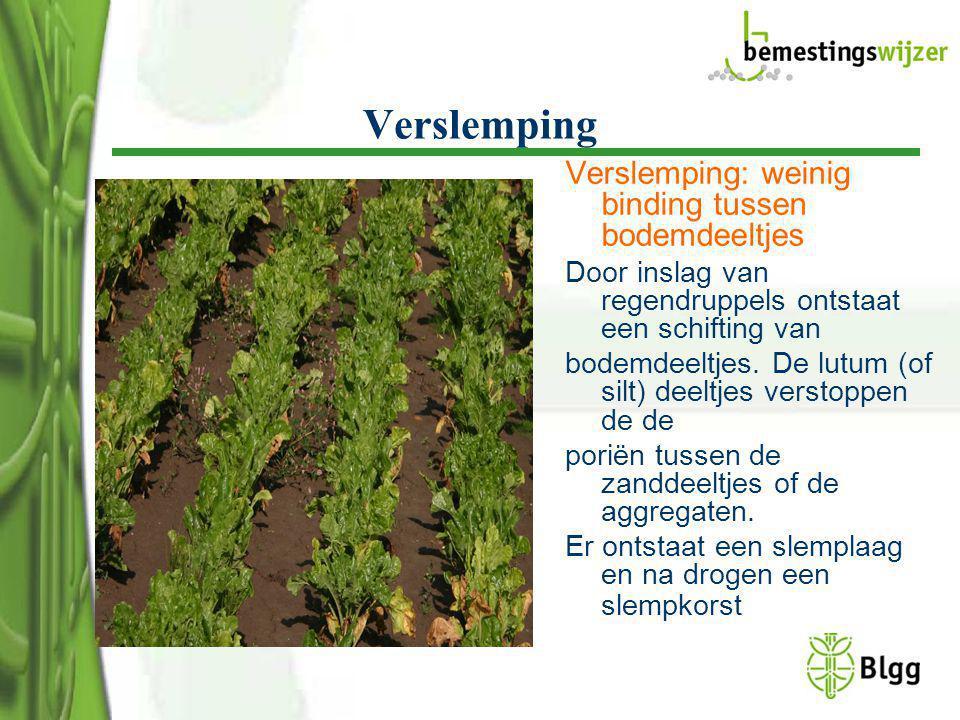 Verslemping Verslemping: weinig binding tussen bodemdeeltjes Door inslag van regendruppels ontstaat een schifting van bodemdeeltjes. De lutum (of silt