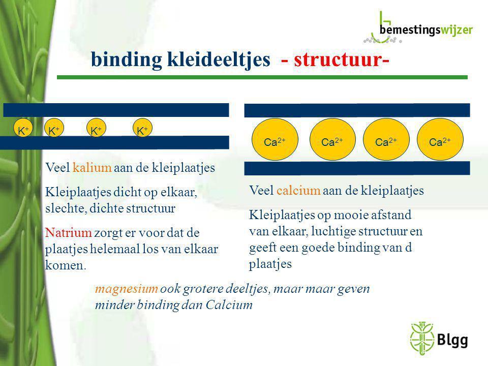 binding kleideeltjes - structuur- K+K+ K+K+ K+K+ K+K+ Ca 2+ Veel kalium aan de kleiplaatjes Kleiplaatjes dicht op elkaar, slechte, dichte structuur Na