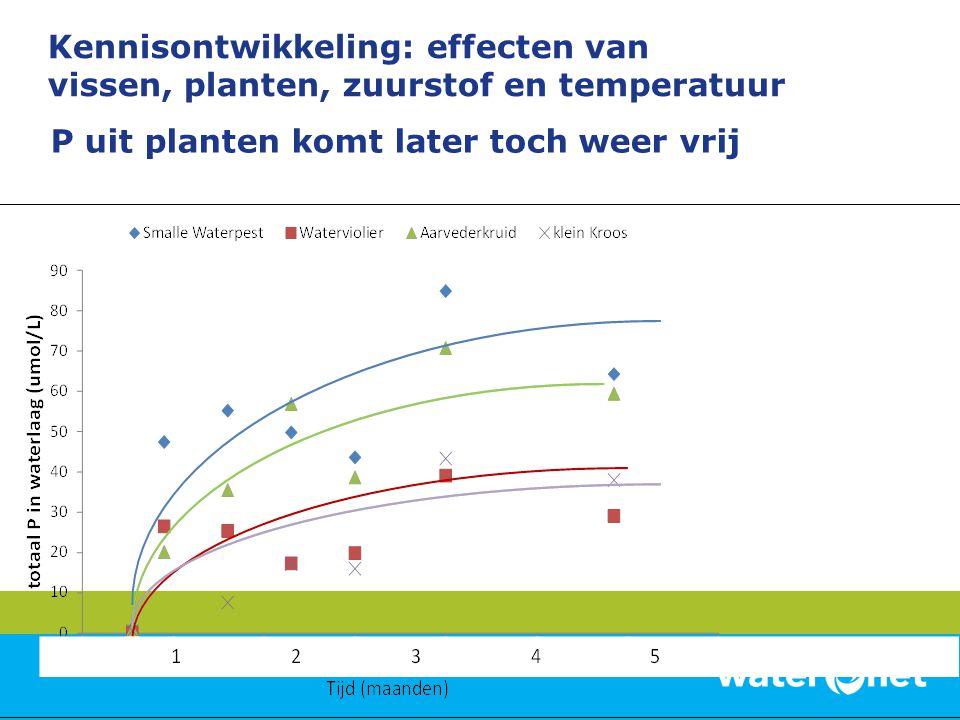 P uit planten komt later toch weer vrij Kennisontwikkeling: effecten van vissen, planten, zuurstof en temperatuur