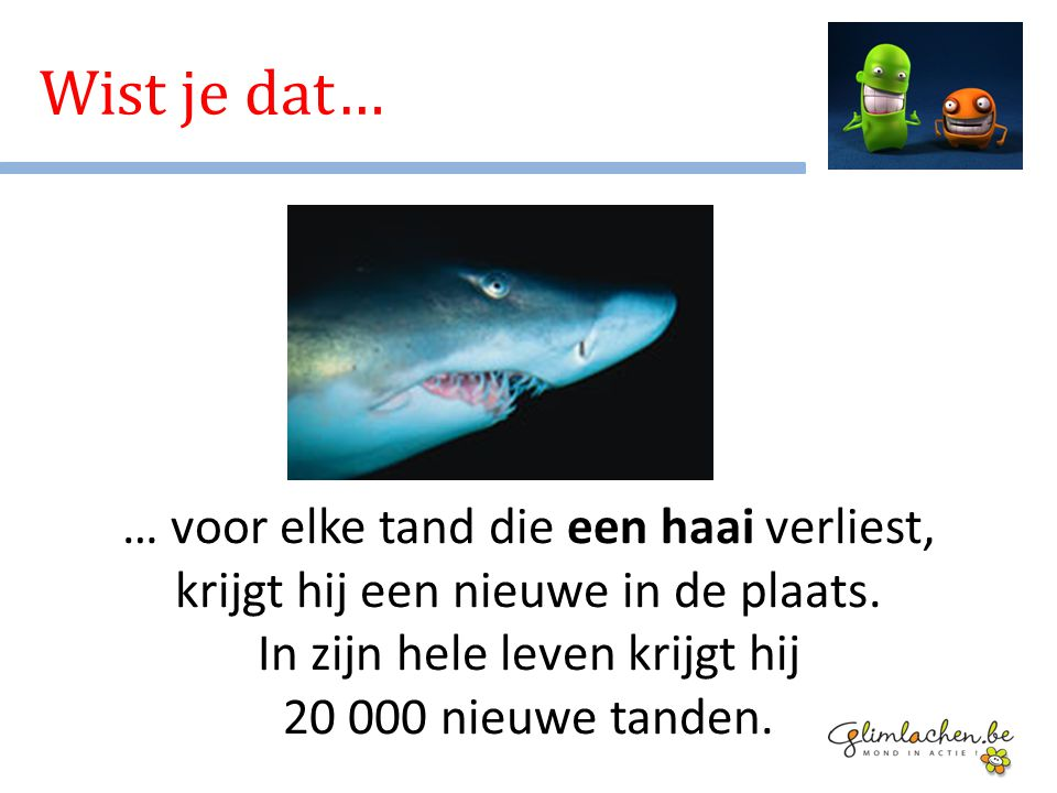 … voor elke tand die een haai verliest, krijgt hij een nieuwe in de plaats. In zijn hele leven krijgt hij 20 000 nieuwe tanden. Wist je dat…