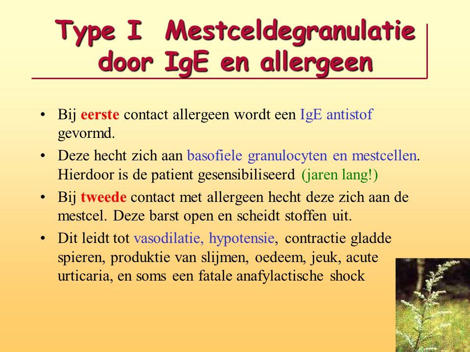 Type I Mestceldegranulatie door IgE en allergeen Bij eerste contact allergeen wordt een IgE antistof gevormd. Deze hecht zich aan basofiele granulocyt