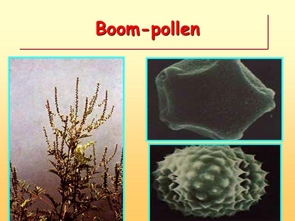 Boom-pollen