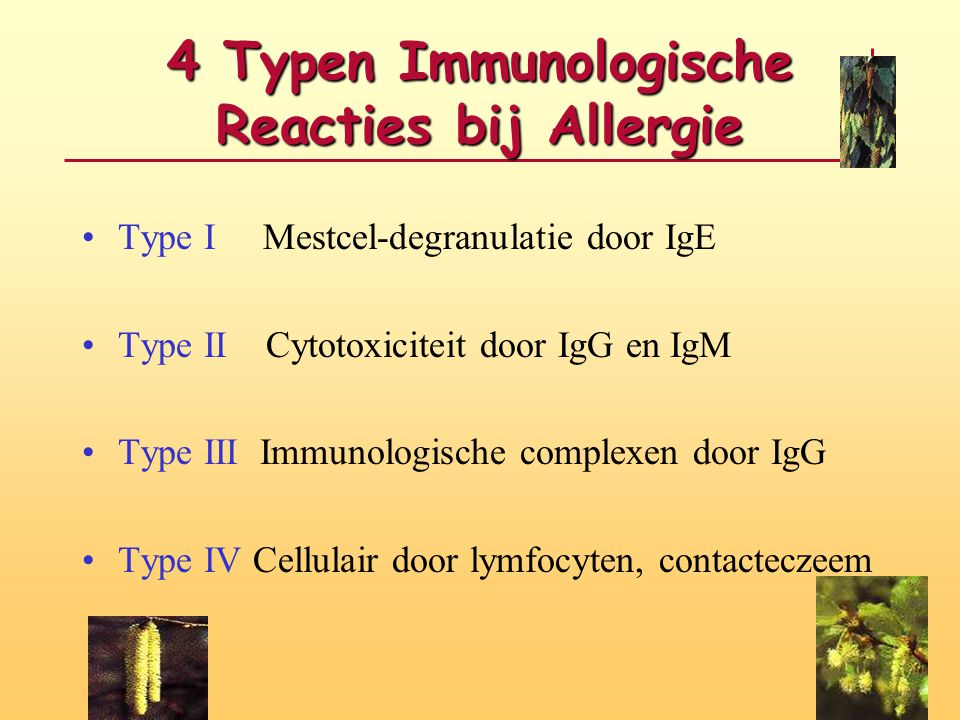 4 Typen Immunologische Reacties bij Allergie Type I Mestcel-degranulatie door IgE Type II Cytotoxiciteit door IgG en IgM Type III Immunologische compl