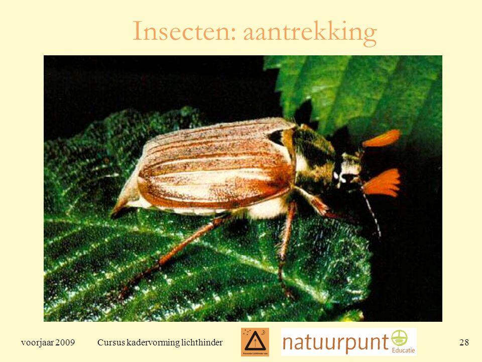 voorjaar 2009 Cursus kadervorming lichthinder 28 Insecten: aantrekking