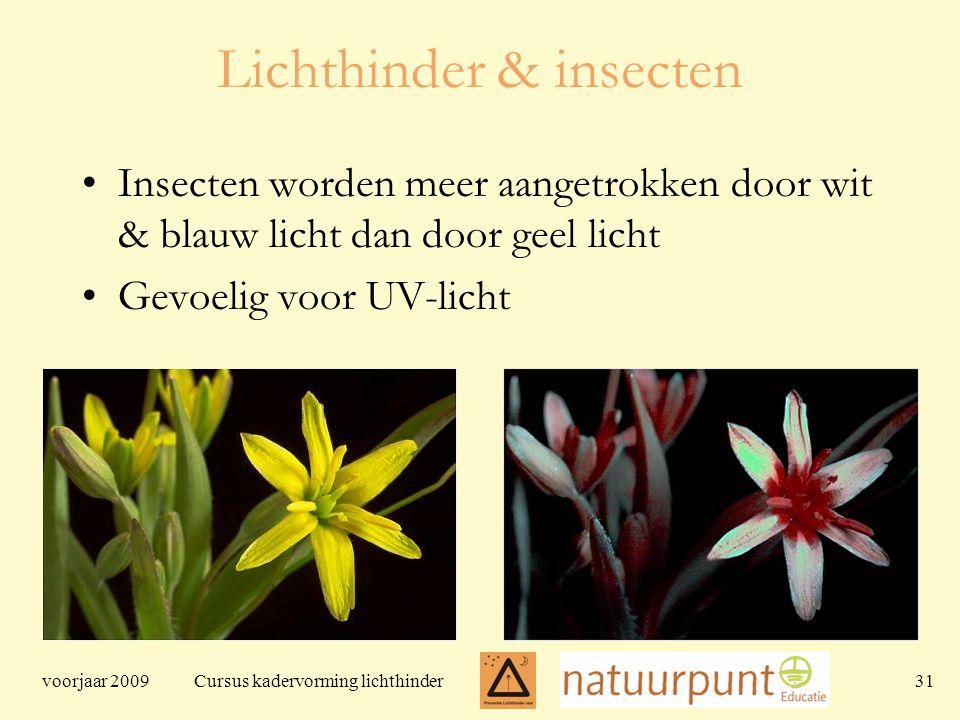 voorjaar 2009 Cursus kadervorming lichthinder 31 Lichthinder & insecten Insecten worden meer aangetrokken door wit & blauw licht dan door geel licht Gevoelig voor UV-licht