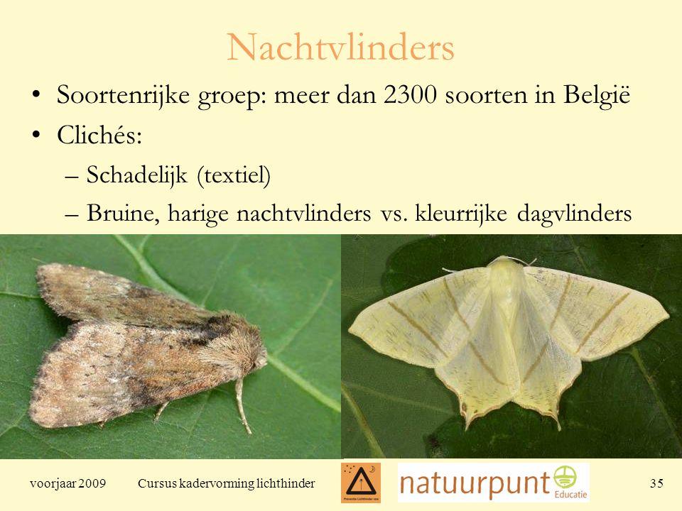 voorjaar 2009 Cursus kadervorming lichthinder 35 Nachtvlinders Soortenrijke groep: meer dan 2300 soorten in België Clichés: –Schadelijk (textiel) –Bruine, harige nachtvlinders vs.