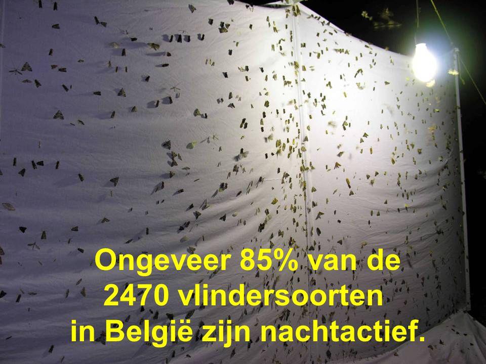 voorjaar 2009 Cursus kadervorming lichthinder 36 Ongeveer 85% van de 2470 vlindersoorten in België zijn nachtactief.