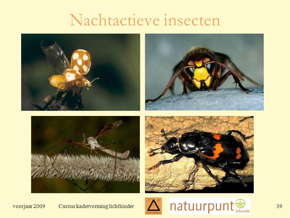 voorjaar 2009 Cursus kadervorming lichthinder 39 Nachtactieve insecten