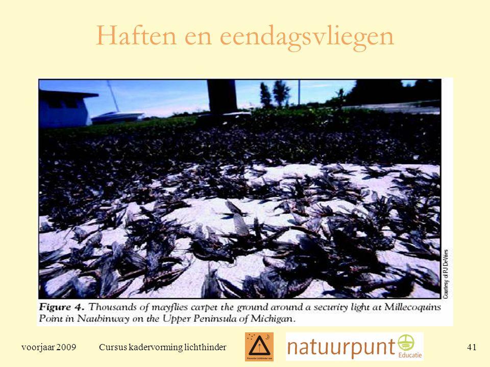 voorjaar 2009 Cursus kadervorming lichthinder 41 Haften en eendagsvliegen